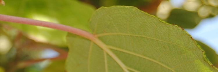 Nachhaltigkeit & Ökologie